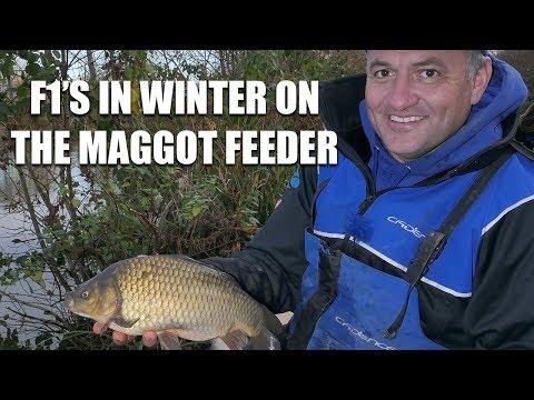 F1's In Winter On The Maggot Feeder
