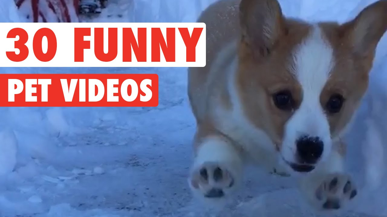 Uncategorized Funny Pet Videos For Kids 30 funny pet videos animal compilation 2016 youtube