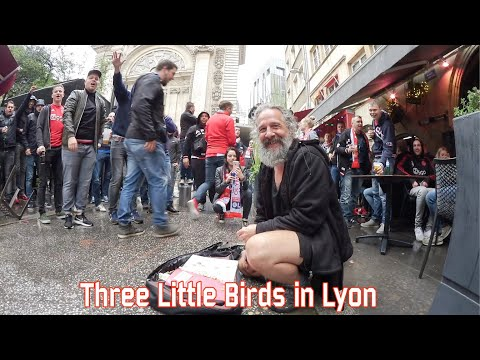 Three little birds in Lyon