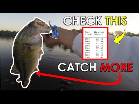#1 Factor You Ignore When Fishing Shallow For Summer Bass