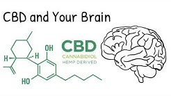 CBD and Your Brain | What Does It Do?
