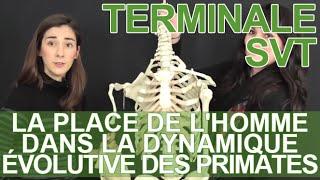 La place de l'Homme dans la dynamique évolutive des Primates