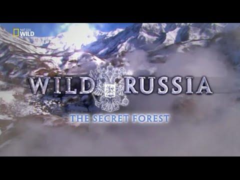 Vahşi Rusya : Gizli Orman  (Belgesel)