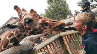 Lustige Tiere im Zoo gegen Kinder Zusammenstellung