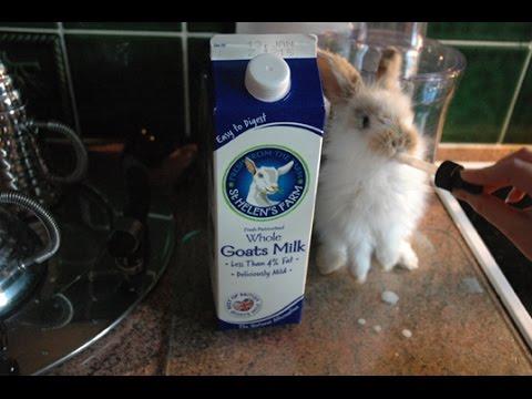 Goats Milk Baby Bunny Rabbit Patch Youtube