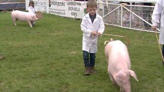 Moch - Trinwyr Ifanc | Pigs - Young Handlers