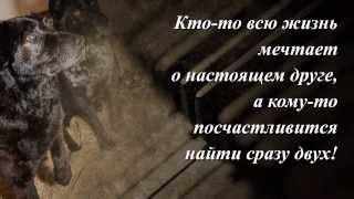 Минск. БИМ и ЖУК - замечательные красавцы в дар.