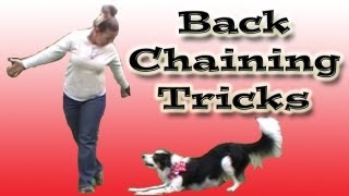 Backchaining A Canine Freestyle Routine - Clicker Dog Training