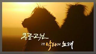 KBS 걸작 다큐멘터리 (몽골고원 2편 - 낙타의 노래) #MongolianPlat #camel