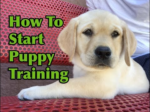 How To Start Training Your Puppy!