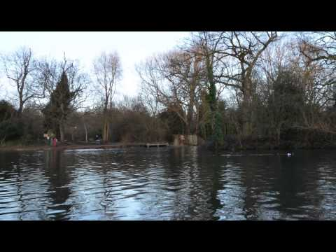Tooting Bec Common Pond