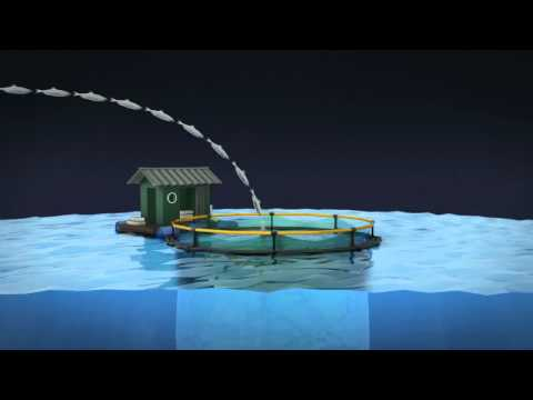 Global Fishing Stocks Disappearing at Alarming Rate - Apocalypse 2012 - World