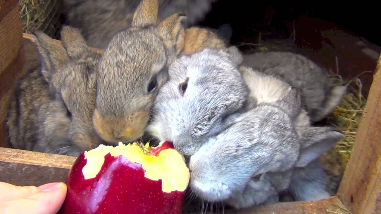 how to tell if a rabbit is safe to eat