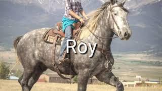 Rock and Roy, team of 8&6 yr.old Dapple Grey Percheron Geldings.