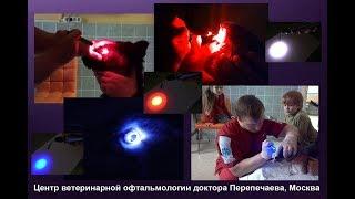 Тест сетчатки животных - Red / Blue / White