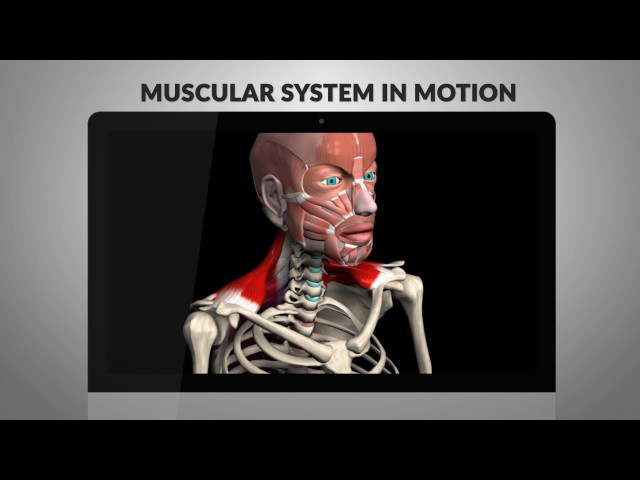 human anatomy software app | muscular anatomy 3d motion diagrams, Muscles