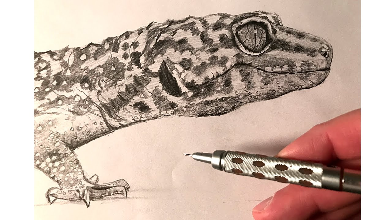 leopard gecko speed drawing 2 youtube