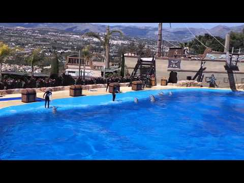 Surfing on top of the Dolphins, Mundomar, Benidorm, March 2014