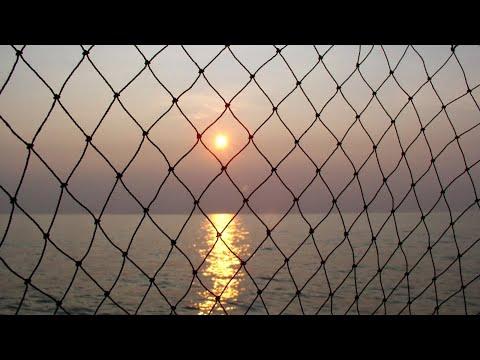 Рыбалка сетями или промысловый лов рыбы. Крупная рыба в крупные сети. Богатый улов! Видео 2020.