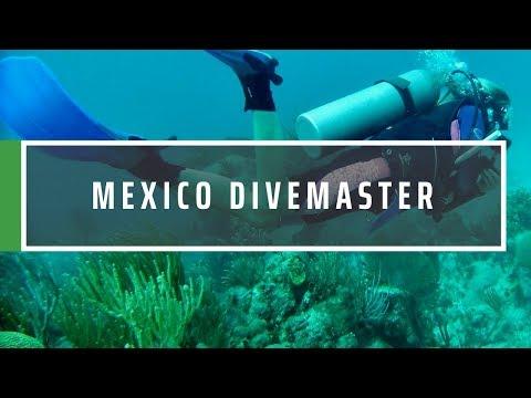 Mexico Divemaster Internship
