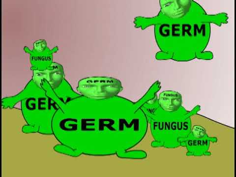 skin and stomach germs video