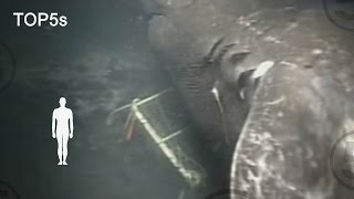 5 Most Mysterious \u0026 Unexplained Sea Creatures