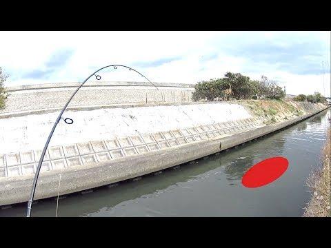 汚染されたドブ川で信じられない巨大魚が釣れた