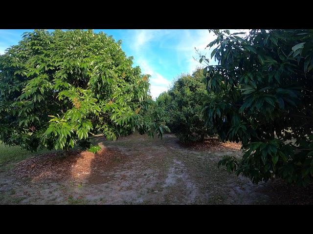 Island Tropical Fruit Virtual Tour