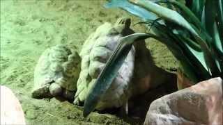 Seks żółwi w ZOO w Zamościu