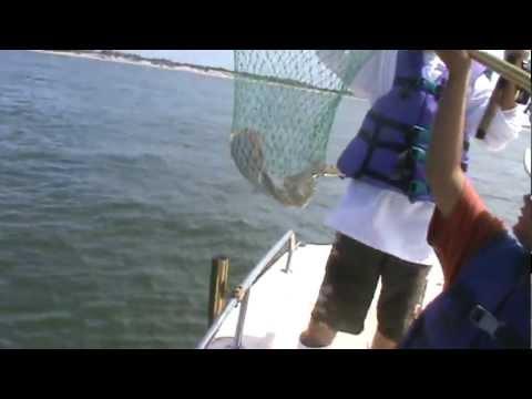 Hi flier back bay fluke fishing barnegat bay nj 7 9 10 for Barnegat bay fishing report