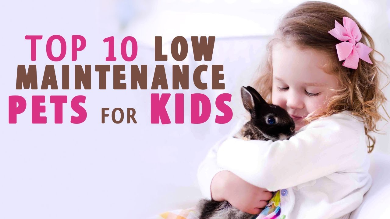 Low maintenance and Best pets for kids - YouTube
