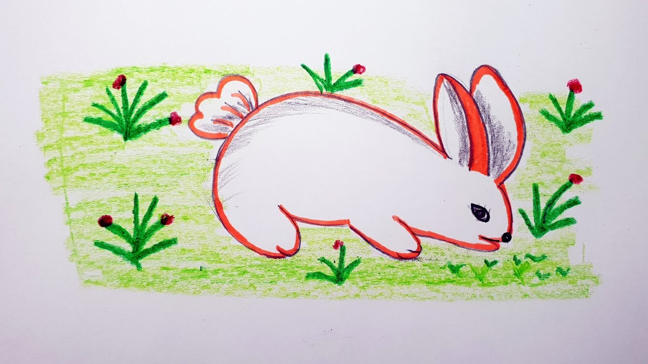 How To Draw A Rabbit Colour For Beginner S Step By Step Easy Rabbit Drawing Youtube