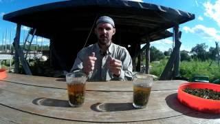 Иван чай -  дополнение // Из города в деревню