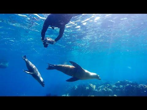 Freediving with Underwater Photographer Luke Inman