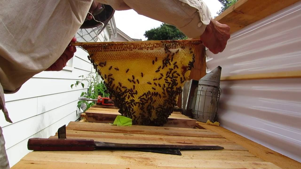 installing a queen excluder in a top bar hive youtube
