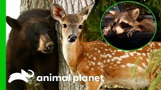 🔴 Wild Animal Rescues | Animal Planet