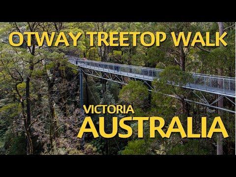 Otway Treetop Walk - A must do in Victoria Australia