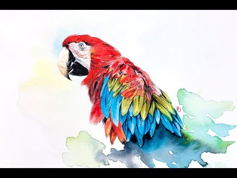 Watercolor Macaw Painting Demonstration