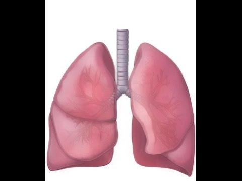 BREATH SOUNDS- BRONCHITIS