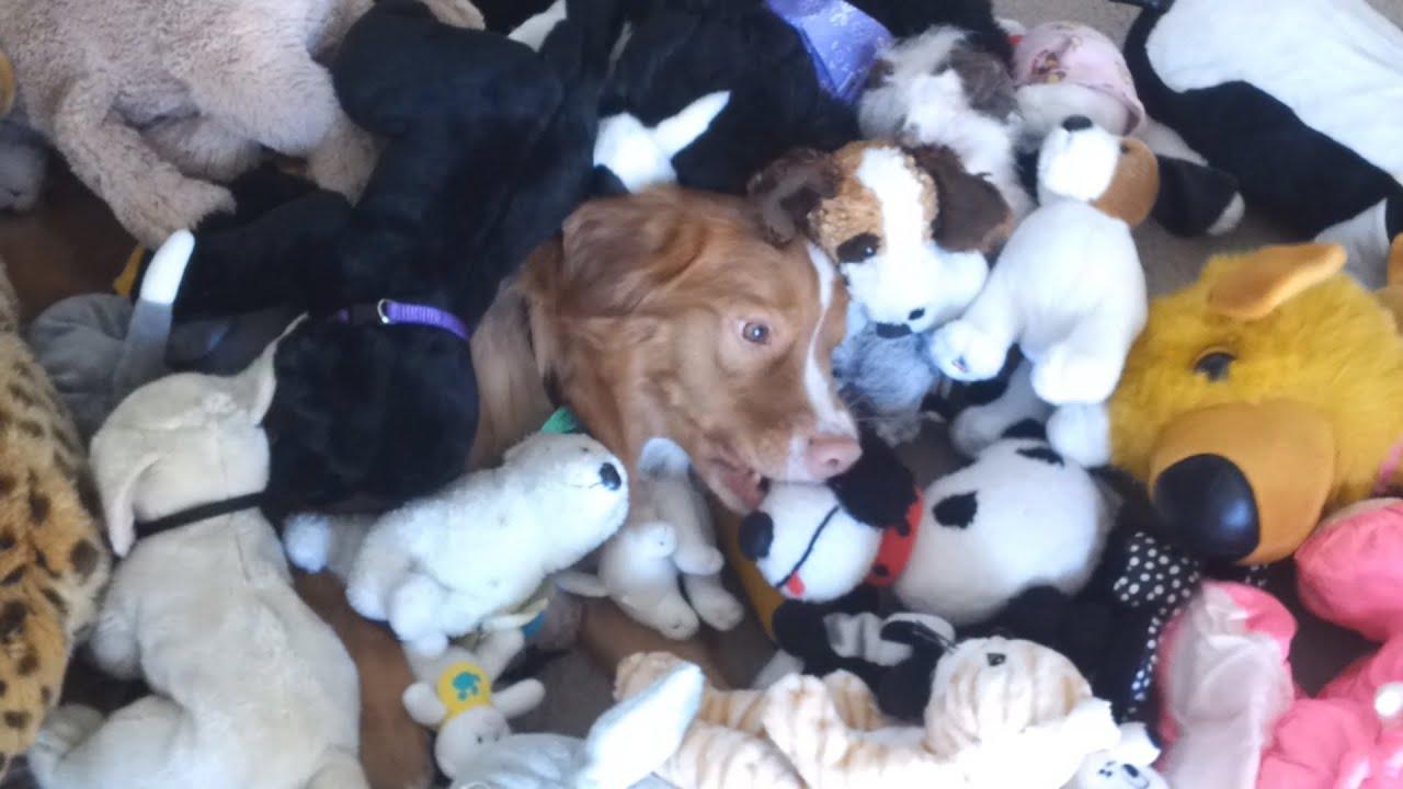 Puppy Dog Pile