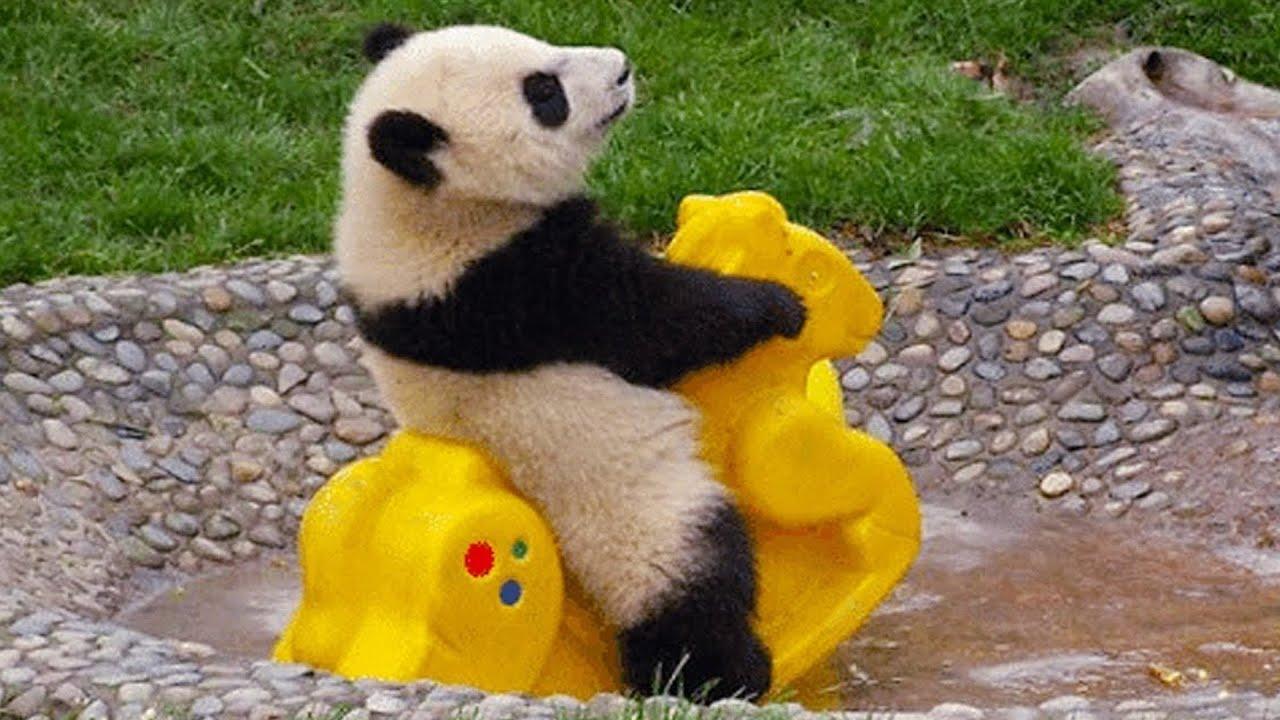 Download Funny Panda Sunday 🐼 [EPIC LAUGHS]