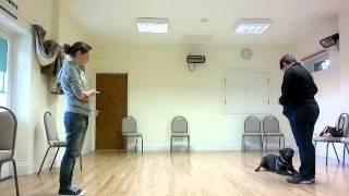 Dog Training: Buddie The Staffy X Labrador