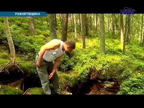 На Прикарпатті лісівники