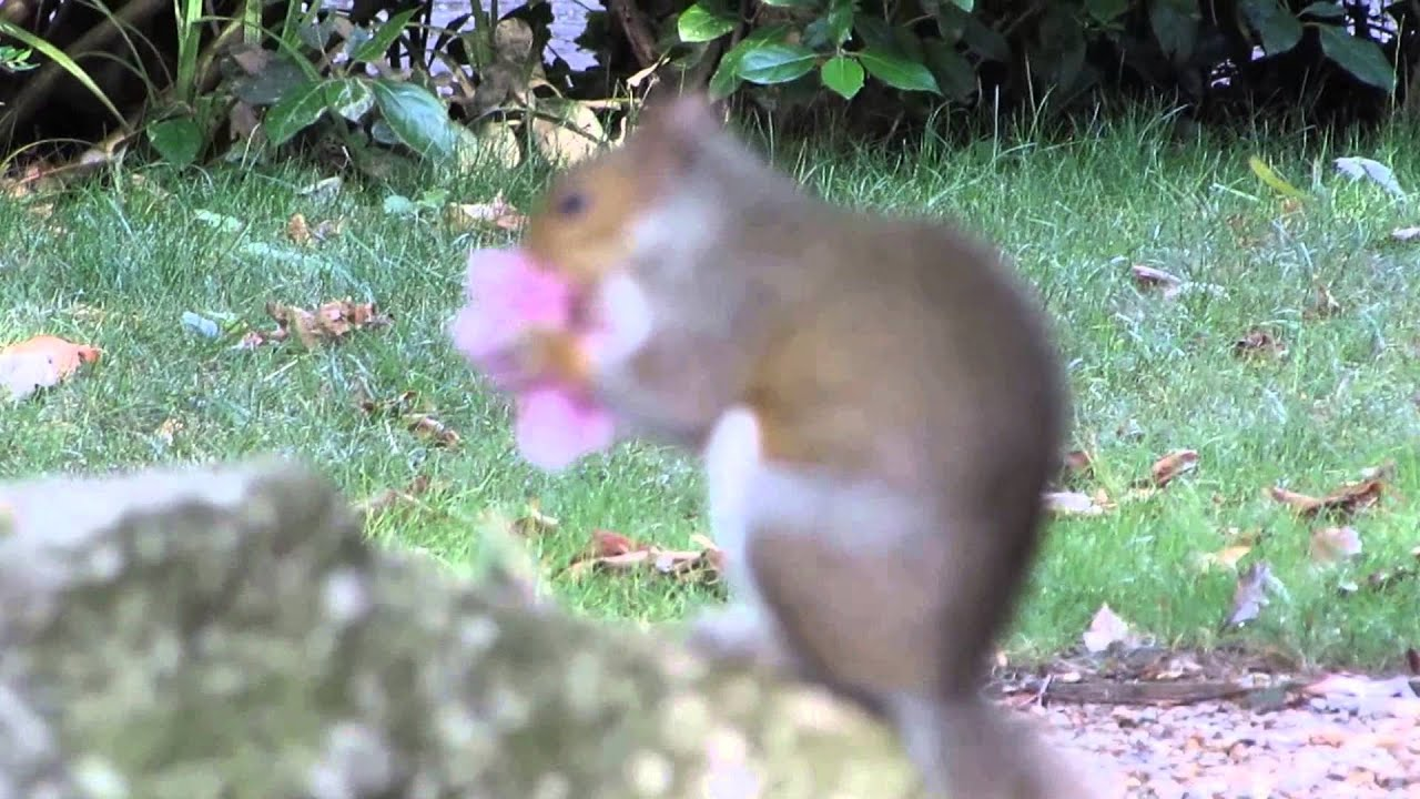 Squirrels Caught On Camera Chomping Their Way Through Loved Ones