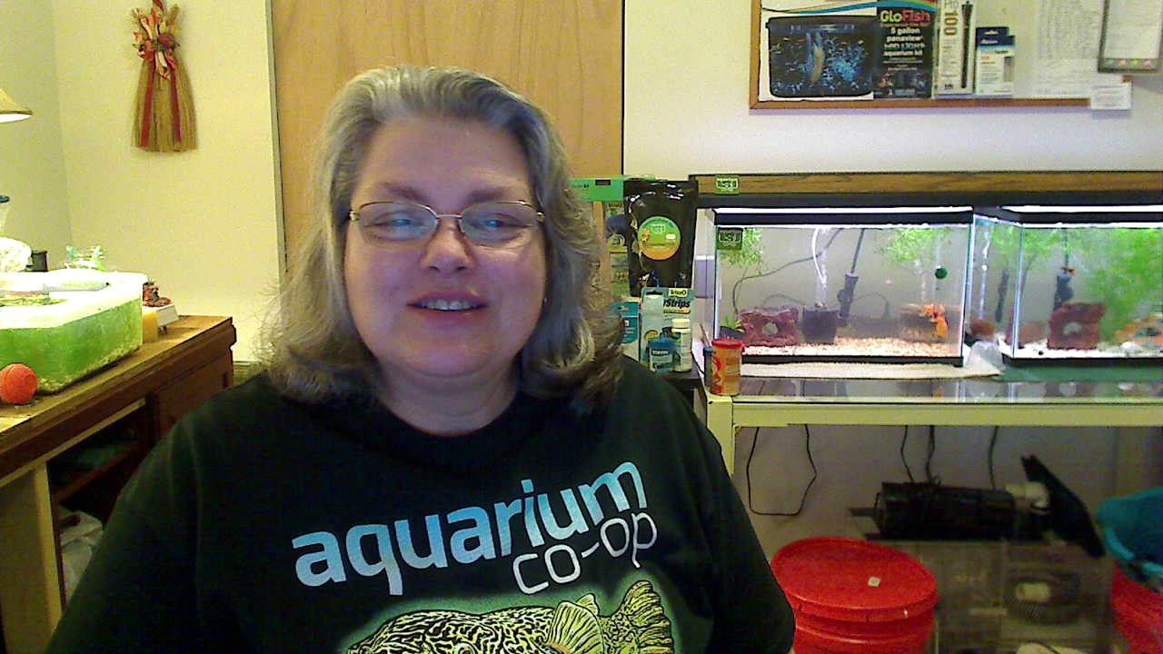 Aquarium Co Op Congrats 50k Youtube