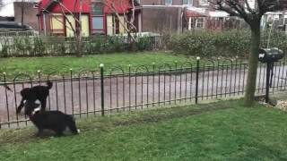Dog plays with passbys