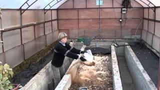 видео Осенняя подготовка теплицы к следующему сезону