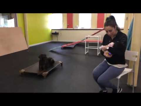 Training | New baby at dog training session with Kiser | Solid K9 Training Dog Training