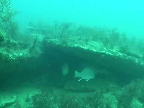 Вопрос: Какая рыба водится в Черном море, какие виды живут в Черном море Фото?