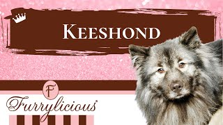 Keeshond Breed Facts